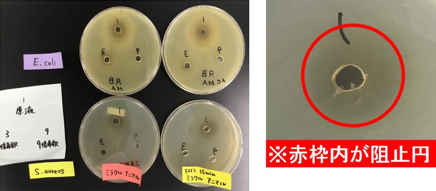 ミラクルアニマル 鶏で抗菌